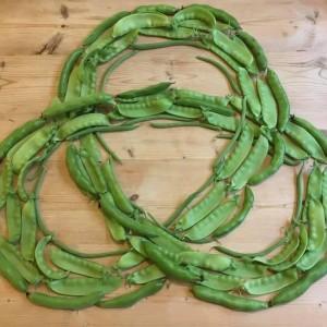 Legumes Link - Cath Weir Biggar Area Gardeners