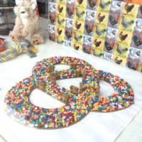Healthy Pets - Biggar High Street