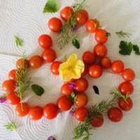 Tomatoes and Herb Link - Judy Jordan