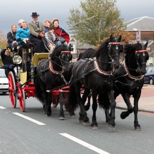 Horse and carriage on the Big Day Out
