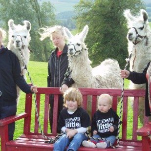 A day with the Llamas