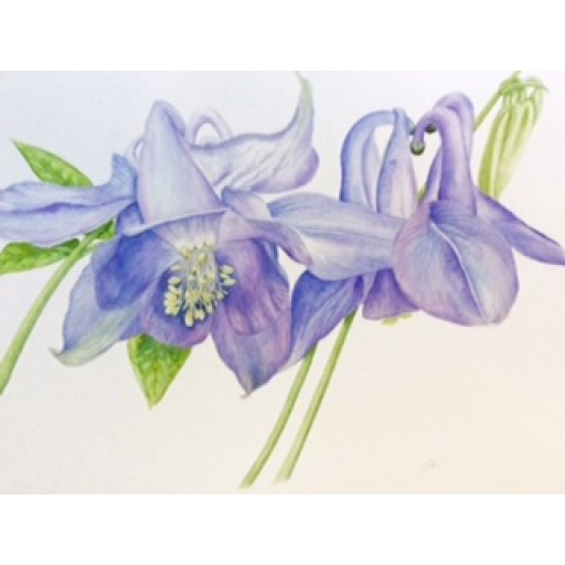 Biggar Botanical Art Group - Open Studio